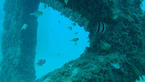 Image of artificial reef